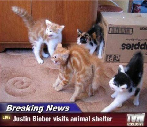 "alt=""justin beiber kittens"", alt=""crazy kittens"""
